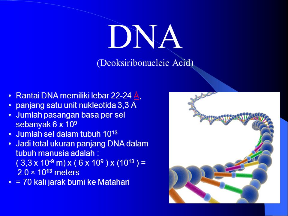 MODUL 1 STRUKTUR DNA BIOLOGI DASAR Dr. Djoko Agus Purwanto, Apt., MSi