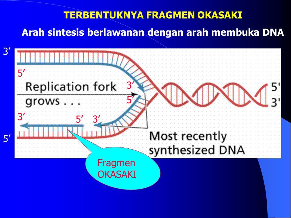 Enzim yang berperan membuka double heliks DNA 1. Helicase : membuka double heliks 2. SSBP (Single Strand Binding Protein) : menjaga single strand agar