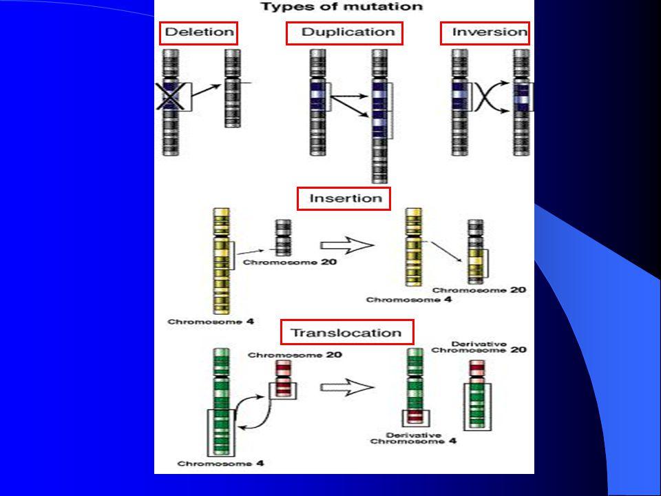 3. MUTASI PADA TINGKAT KROMOSOM a. Delesi : Hilangnya suatu fragmen DNA dalam satu kromosom b. Insersi : Bertambahnya suatu fragmen DNA dalam suatu kr