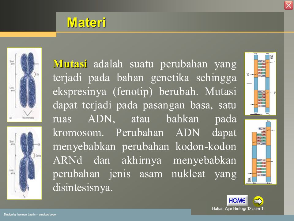 Design by herman Lasrin – smakos bogor Bahan Ajar Biologi 12 sem 1 Latihan 1.