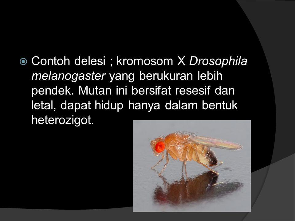  Contoh delesi ; kromosom X Drosophila melanogaster yang berukuran lebih pendek. Mutan ini bersifat resesif dan letal, dapat hidup hanya dalam bentuk