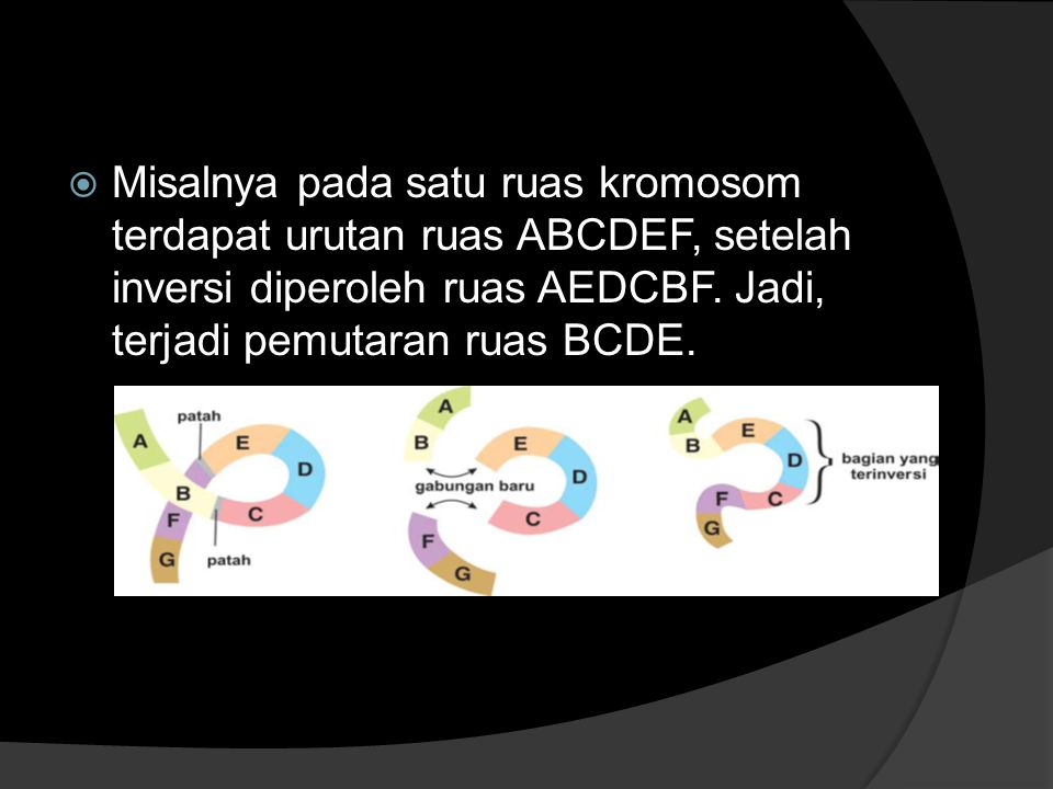  Misalnya pada satu ruas kromosom terdapat urutan ruas ABCDEF, setelah inversi diperoleh ruas AEDCBF. Jadi, terjadi pemutaran ruas BCDE.