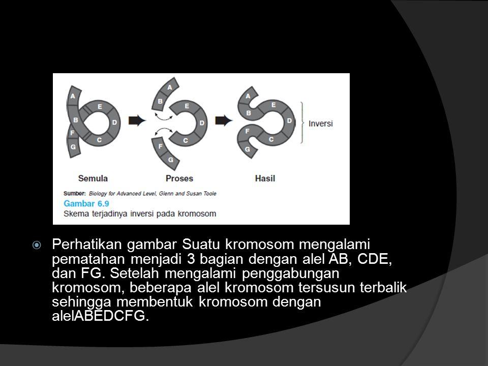  Perhatikan gambar Suatu kromosom mengalami pematahan menjadi 3 bagian dengan alel AB, CDE, dan FG. Setelah mengalami penggabungan kromosom, beberapa