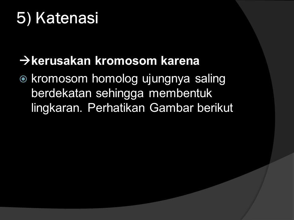 5) Katenasi  kerusakan kromosom karena  kromosom homolog ujungnya saling berdekatan sehingga membentuk lingkaran.