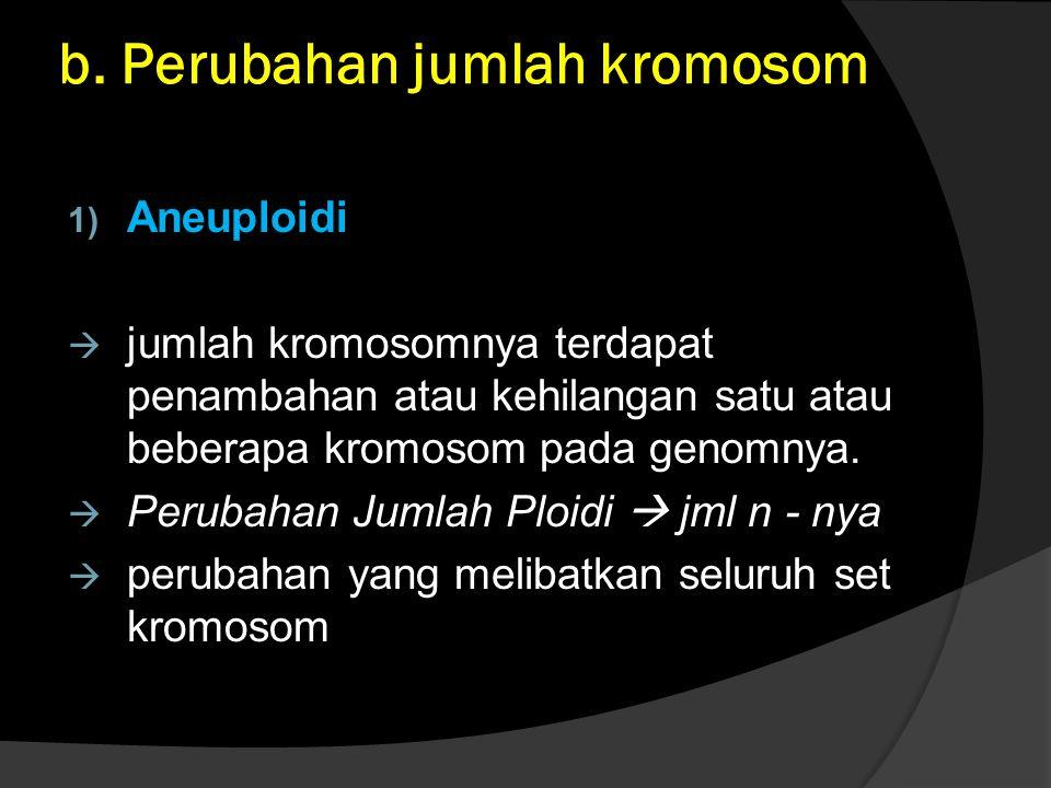 b. Perubahan jumlah kromosom 1) Aneuploidi  jumlah kromosomnya terdapat penambahan atau kehilangan satu atau beberapa kromosom pada genomnya.  Perub