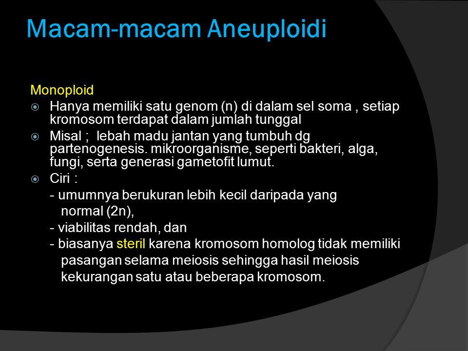 Macam-macam Aneuploidi Monoploid  Hanya memiliki satu genom (n) di dalam sel soma, setiap kromosom terdapat dalam jumlah tunggal  Misal ; lebah madu