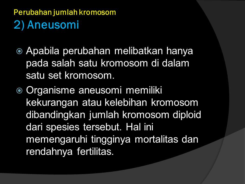 Perubahan jumlah kromosom 2) Aneusomi  Apabila perubahan melibatkan hanya pada salah satu kromosom di dalam satu set kromosom.  Organisme aneusomi m