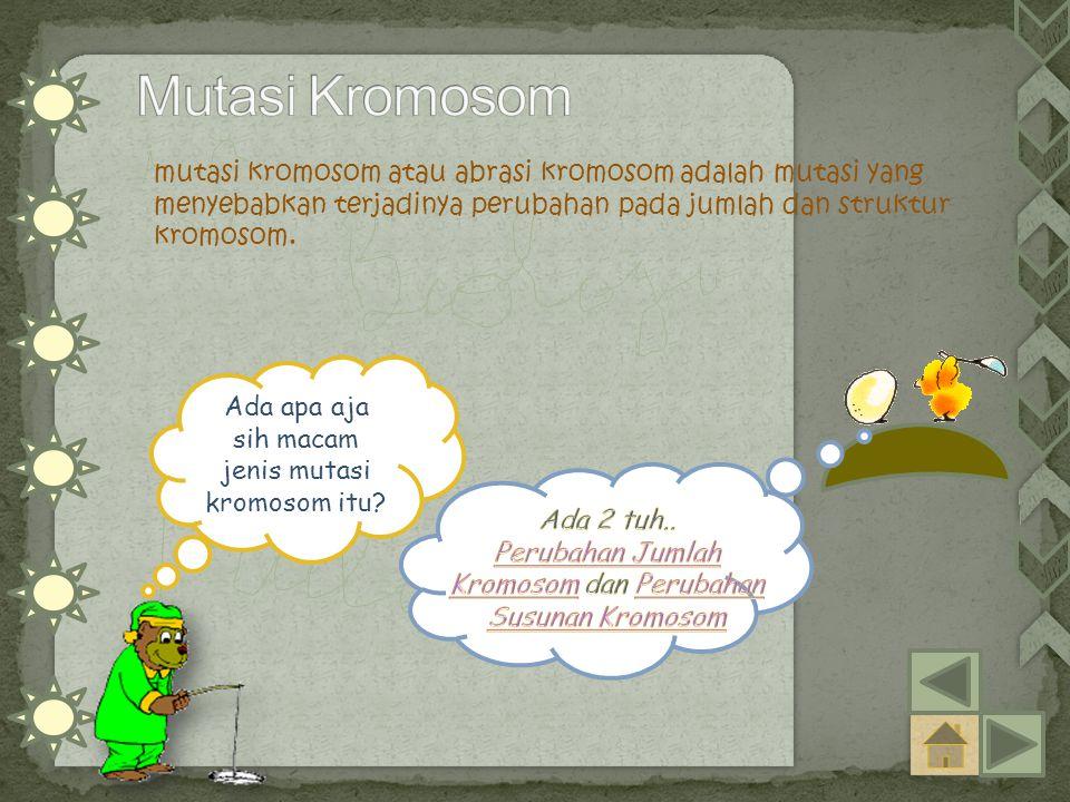 mutasi kromosom atau abrasi kromosom adalah mutasi yang menyebabkan terjadinya perubahan pada jumlah dan struktur kromosom. Ada apa aja sih macam jeni