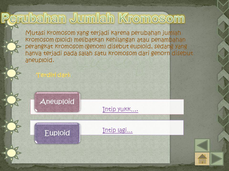 Intip yukk…. Aneuploid Intip lagi… Euploid Mutasi kromosom yang terjadi karena perubahan jumlah kromosom (ploid) melibatkan kehilangan atau penambahan