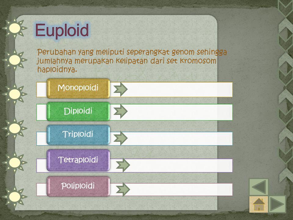Perubahan yang meliputi seperangkat genom sehingga jumlahnya merupakan kelipatan dari set kromosom haploidnya. Monoploidi Diploidi Triploidi Tetraploi