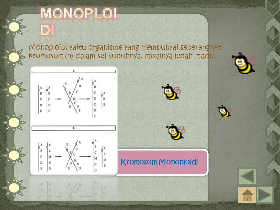 Monoploidi yaitu organisme yang mempunyai seperangkat kromosom (n) dalam sel tubuhnya, misalnya lebah madu. Kromosom Monoploidi Kromosom Monoploidi