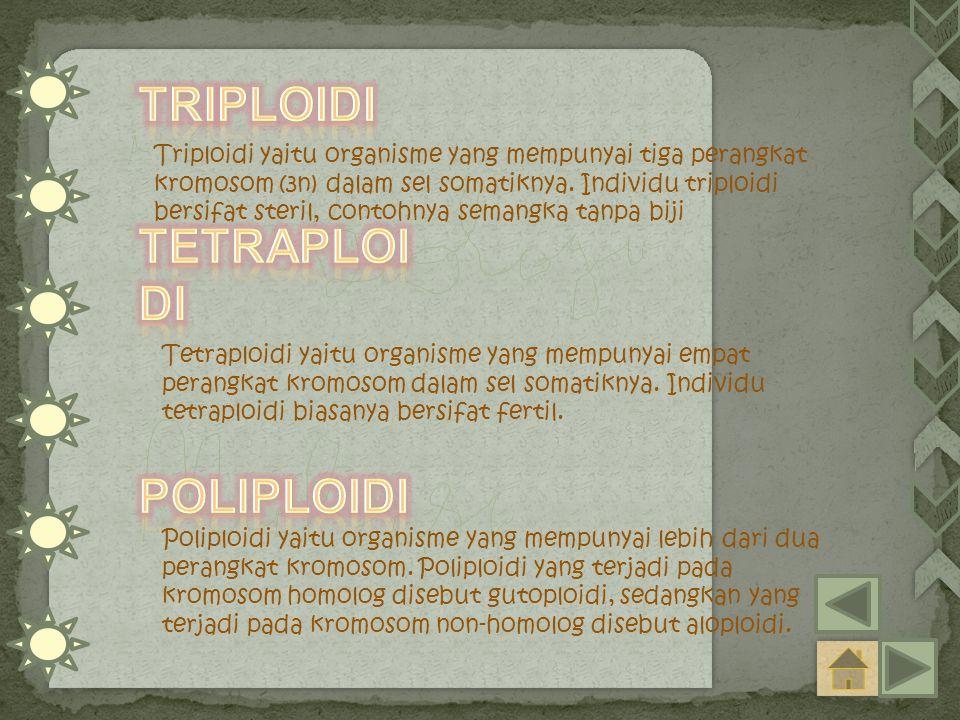 Triploidi yaitu organisme yang mempunyai tiga perangkat kromosom (3n) dalam sel somatiknya. Individu triploidi bersifat steril, contohnya semangka tan