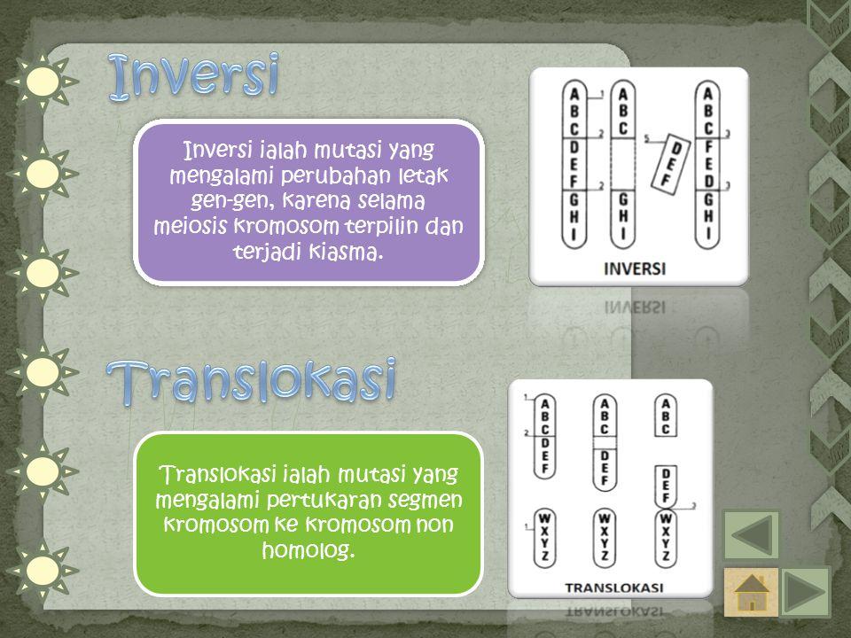 Inversi ialah mutasi yang mengalami perubahan letak gen-gen, karena selama meiosis kromosom terpilin dan terjadi kiasma. Translokasi ialah mutasi yang