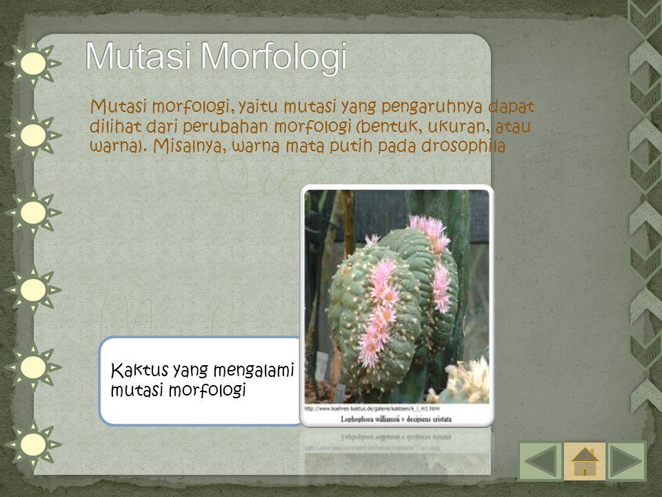 Mutasi morfologi, yaitu mutasi yang pengaruhnya dapat dilihat dari perubahan morfologi (bentuk, ukuran, atau warna). Misalnya, warna mata putih pada d