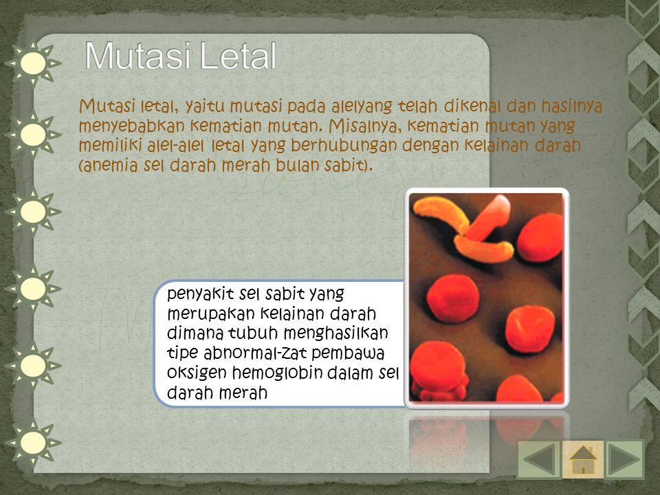 penyakit sel sabit yang merupakan kelainan darah dimana tubuh menghasilkan tipe abnormal-zat pembawa oksigen hemoglobin dalam sel darah merah Mutasi l