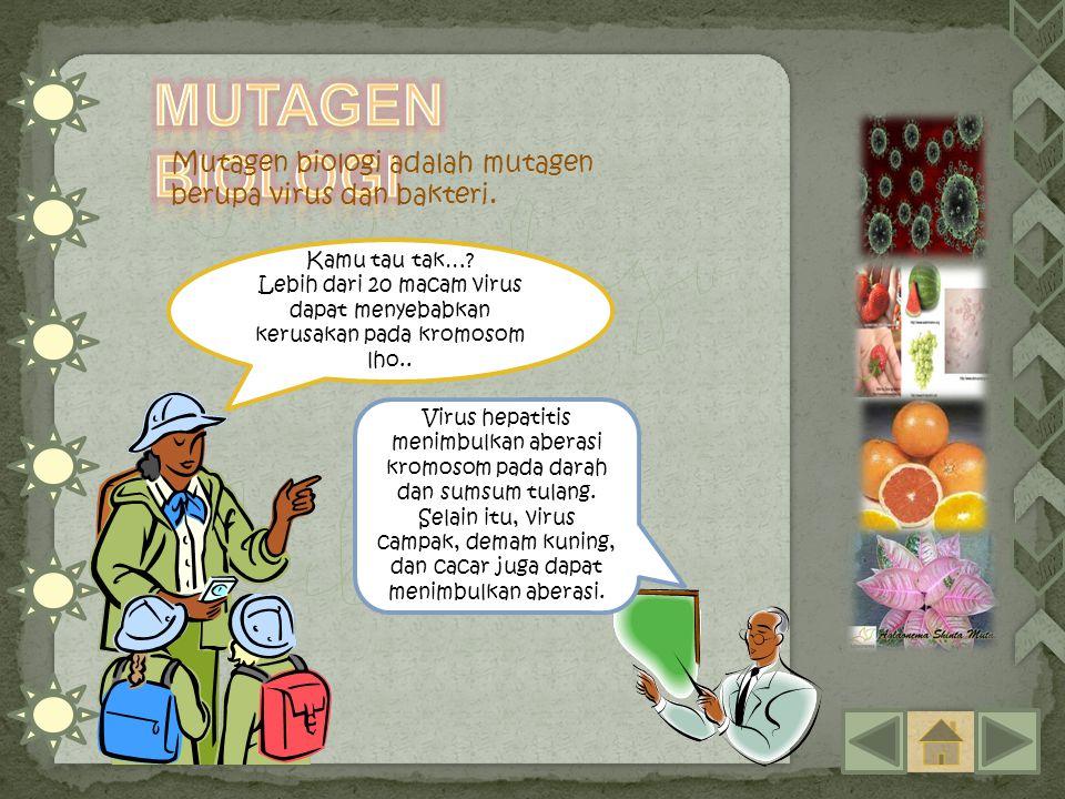 Mutagen biologi adalah mutagen berupa virus dan bakteri. Kamu tau tak…? Lebih dari 20 macam virus dapat menyebabkan kerusakan pada kromosom lho.. Viru