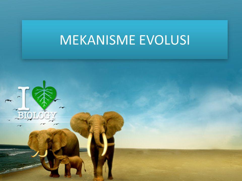 MEKANISME EVOLUSI MEKANISME EVOLUSI