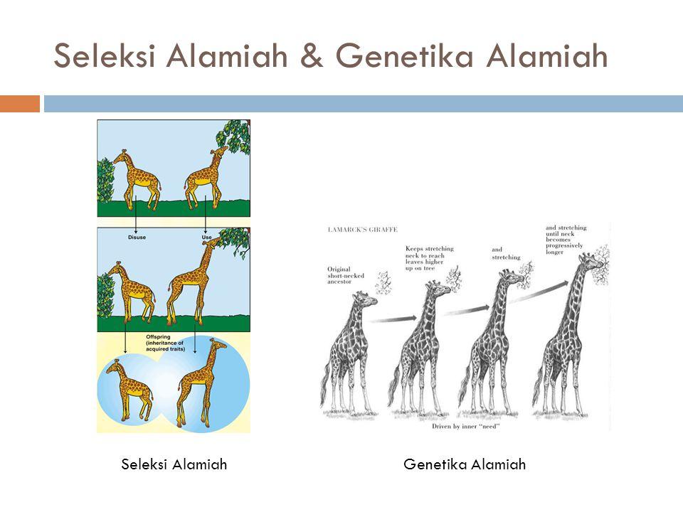 Individu, Kromosom dan Gen 011010001100110000111100 Gen A1 Gen A2 Kromosom A Kromosom BKromosom C Individu 1 Gen A3