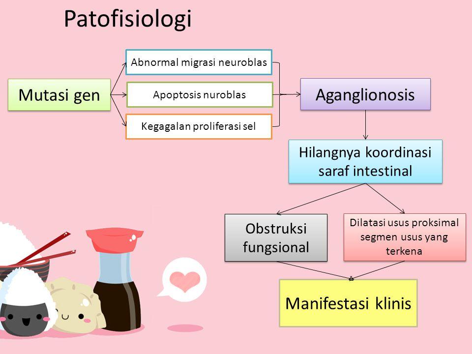 Patofisiologi Mutasi gen Aganglionosis Abnormal migrasi neuroblas Apoptosis nuroblas Kegagalan proliferasi sel Hilangnya koordinasi saraf intestinal O