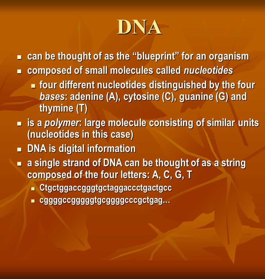 "DNA can be thought of as the ""blueprint"" for an organism can be thought of as the ""blueprint"" for an organism composed of small molecules called nucle"