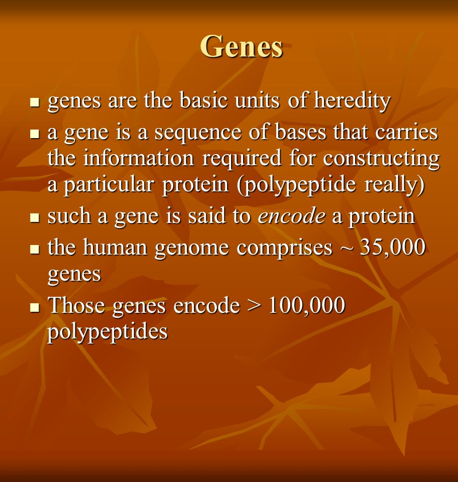 Genes genes are the basic units of heredity genes are the basic units of heredity a gene is a sequence of bases that carries the information required
