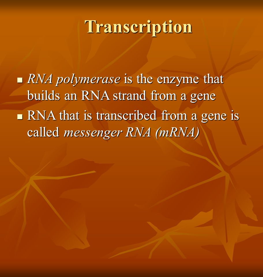 Transcription RNA polymerase is the enzyme that builds an RNA strand from a gene RNA polymerase is the enzyme that builds an RNA strand from a gene RN