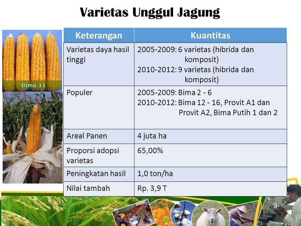 Varietas Unggul Jagung 19 KeteranganKuantitas Varietas daya hasil tinggi 2005-2009: 6 varietas (hibrida dan komposit) 2010-2012: 9 varietas (hibrida d