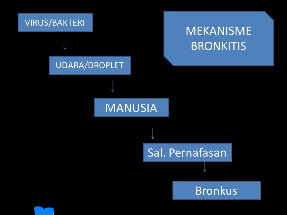 VIRUS/BAKTERI Sal. Pernafasan UDARA/DROPLET MANUSIA Bronkus MEKANISME BRONKITIS