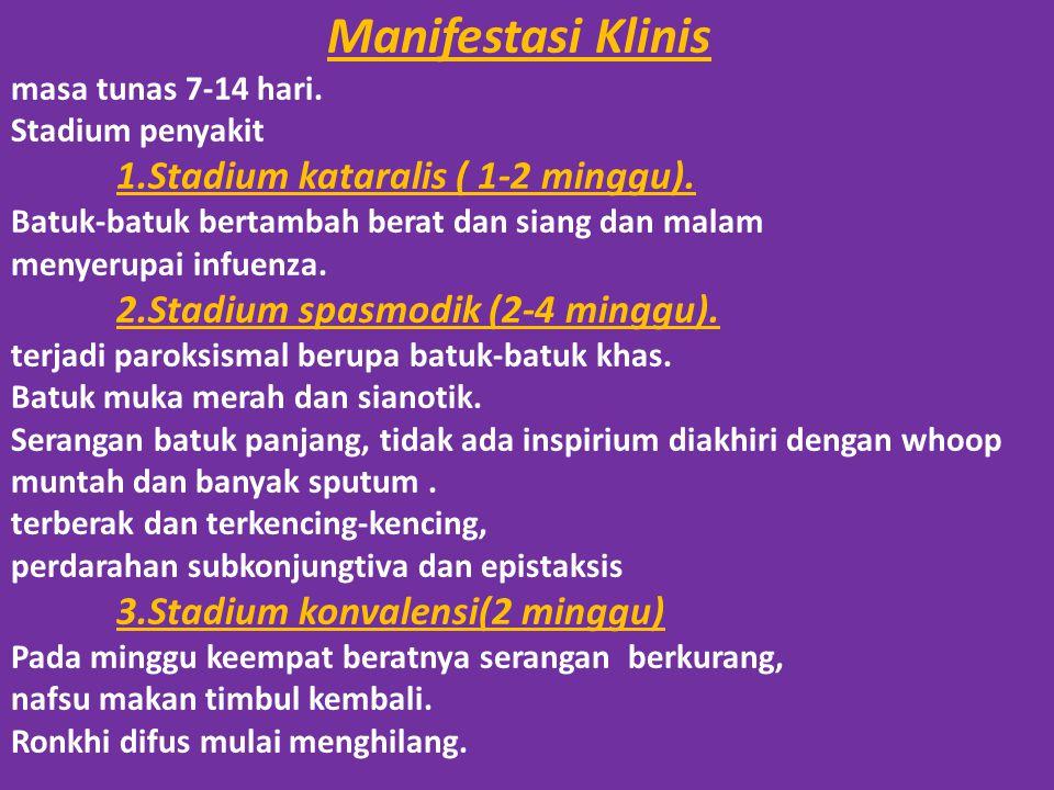 Manifestasi Klinis masa tunas 7-14 hari. Stadium penyakit 1.Stadium kataralis ( 1-2 minggu). Batuk-batuk bertambah berat dan siang dan malam menyerupa