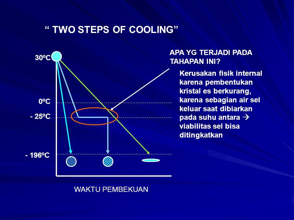 """"""" TWO STEPS OF COOLING"""" 30ºC - 25ºC 0ºC - 196ºC APA YG TERJADI PADA TAHAPAN INI? WAKTU PEMBEKUAN Kerusakan fisik internal karena pembentukan kristal e"""