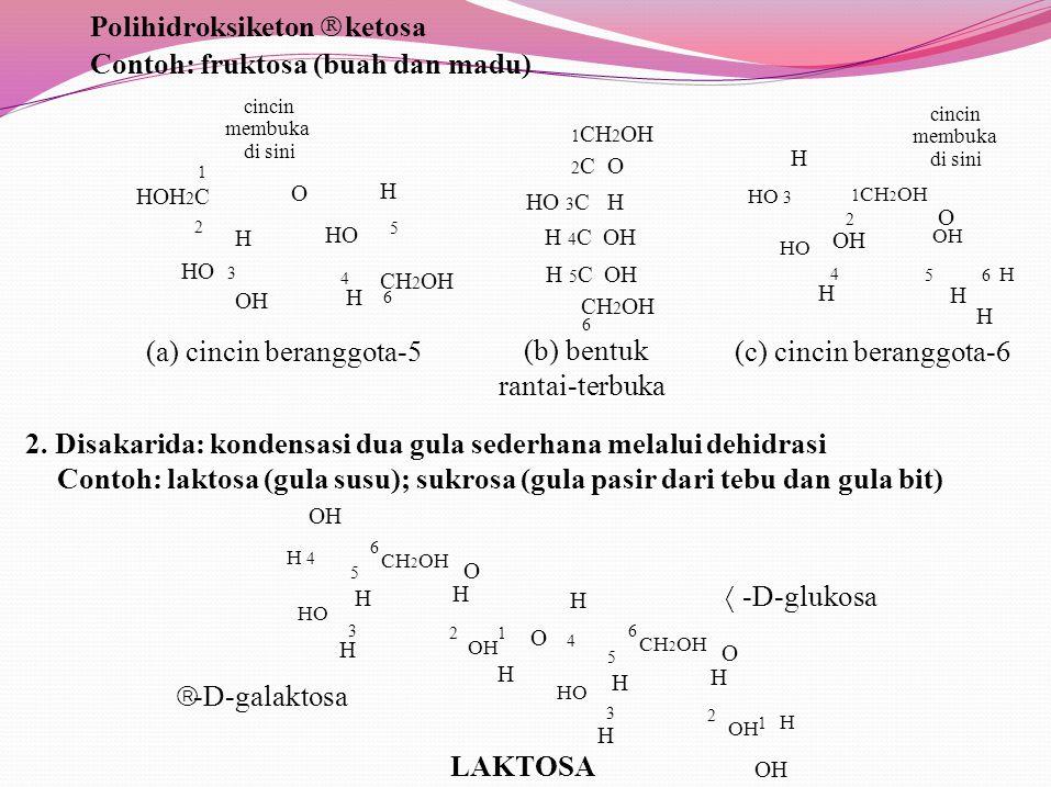 OH H 4 1 H Polihidroksiketon  ketosa Contoh: fruktosa (buah dan madu) HO H 1 CH 2 OH 2 C O HO 3 C H H 4 C OH CH 2 OH 6 1 HOH 2 C 2 3 OH 4H4H H5H5 H 5 C OH CH 2 OH 6 cincin membuka di sini O H HO 3 HO 4H4H 5 6 H H cincin membuka di sini 1 CH 2 OH 2 O OH (a) cincin beranggota-5(c) cincin beranggota-6 (b) bentuk rantai-terbuka 2.