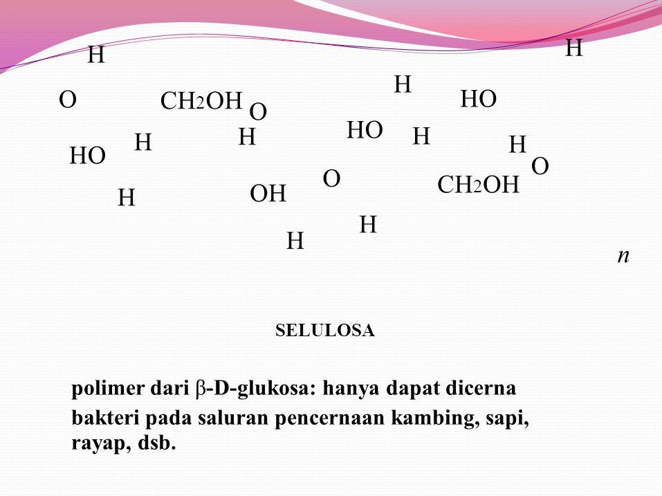 CH 2 OH H H HHHH O H H O O HO O H OH HO HHHH n H CH 2 OH SELULOSA polimer dari β-D-glukosa: hanya dapat dicerna bakteri pada saluran pencernaan kambing, sapi, rayap, dsb.