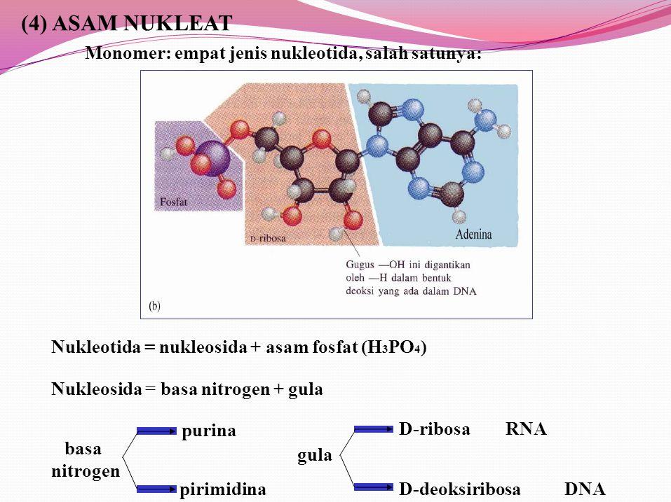 (4) ASAM NUKLEAT Monomer: empat jenis nukleotida, salah satunya: Nukleotida = nukleosida + asam fosfat (H 3 PO 4 ) Nukleosida = basa nitrogen + gula D-ribosaRNA D-deoksiribosaDNA gula purina pirimidina basa nitrogen