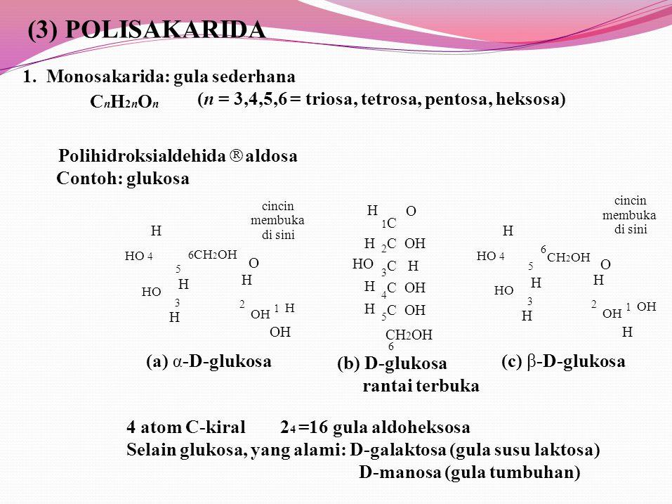 1 H C OH C H C OH CH 2 OH 1 OH (3) POLISAKARIDA 1.