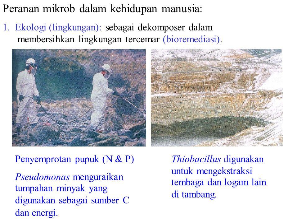 Peranan mikrob dalam kehidupan manusia: 1. Ekologi (lingkungan): sebagai dekomposer dalam membersihkan lingkungan tercemar (bioremediasi). Penyemprota