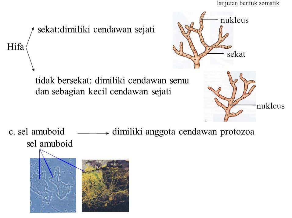 c. sel amuboiddimiliki anggota cendawan protozoa sel amuboid Hifa sekat lanjutan bentuk somatik nukleus sekat:dimiliki cendawan sejati tidak bersekat:
