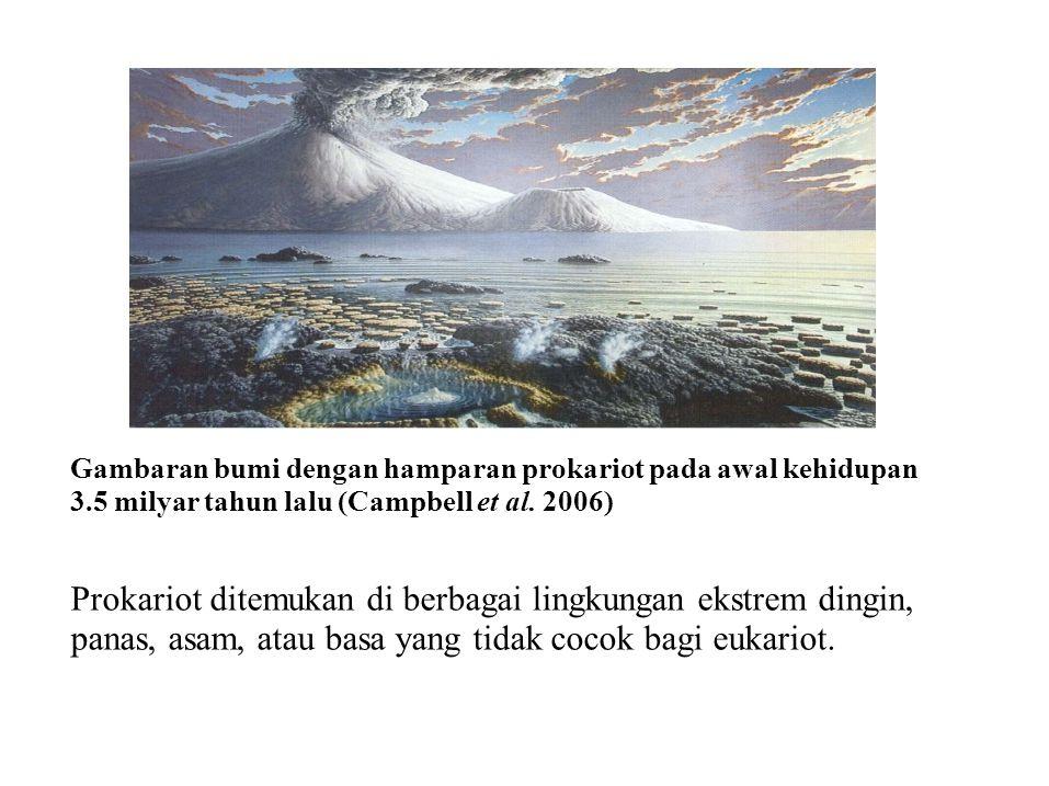 Gambaran bumi dengan hamparan prokariot pada awal kehidupan 3.5 milyar tahun lalu (Campbell et al. 2006) Prokariot ditemukan di berbagai lingkungan ek