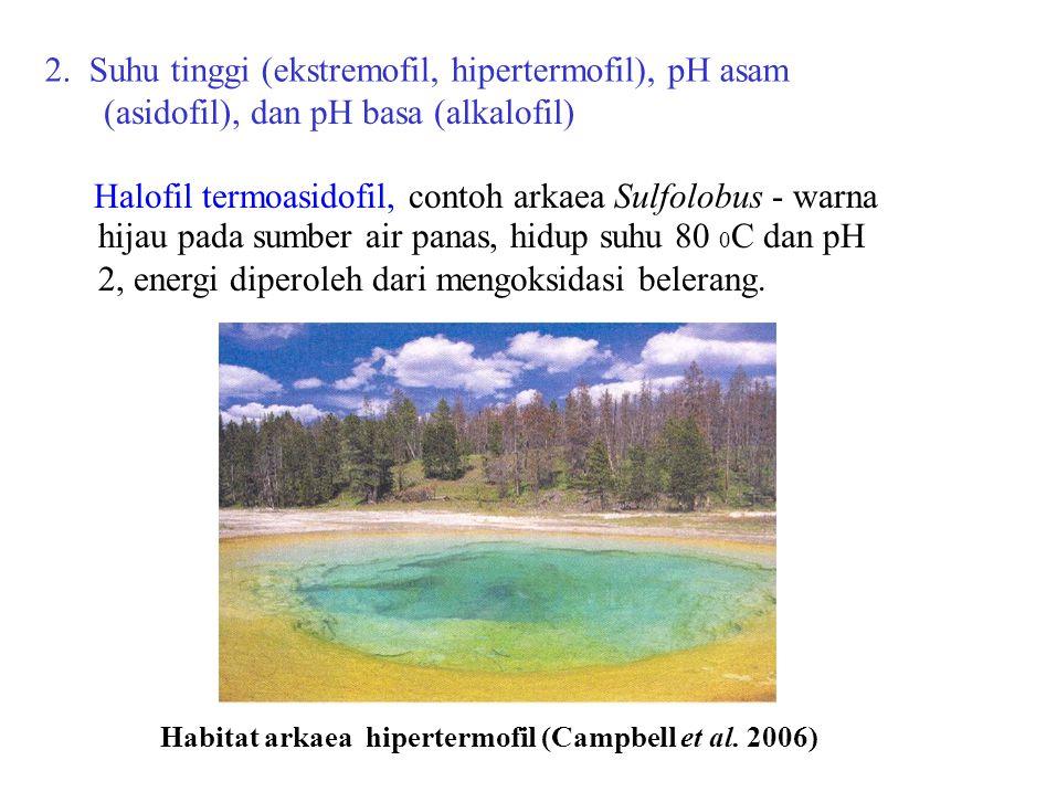 2. Suhu tinggi (ekstremofil, hipertermofil), pH asam (asidofil), dan pH basa (alkalofil) Halofil termoasidofil, contoh arkaea Sulfolobus - warna hijau