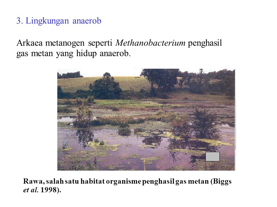 3. Lingkungan anaerob Arkaea metanogen seperti Methanobacterium penghasil gas metan yang hidup anaerob. Rawa, salah satu habitat organisme penghasil g