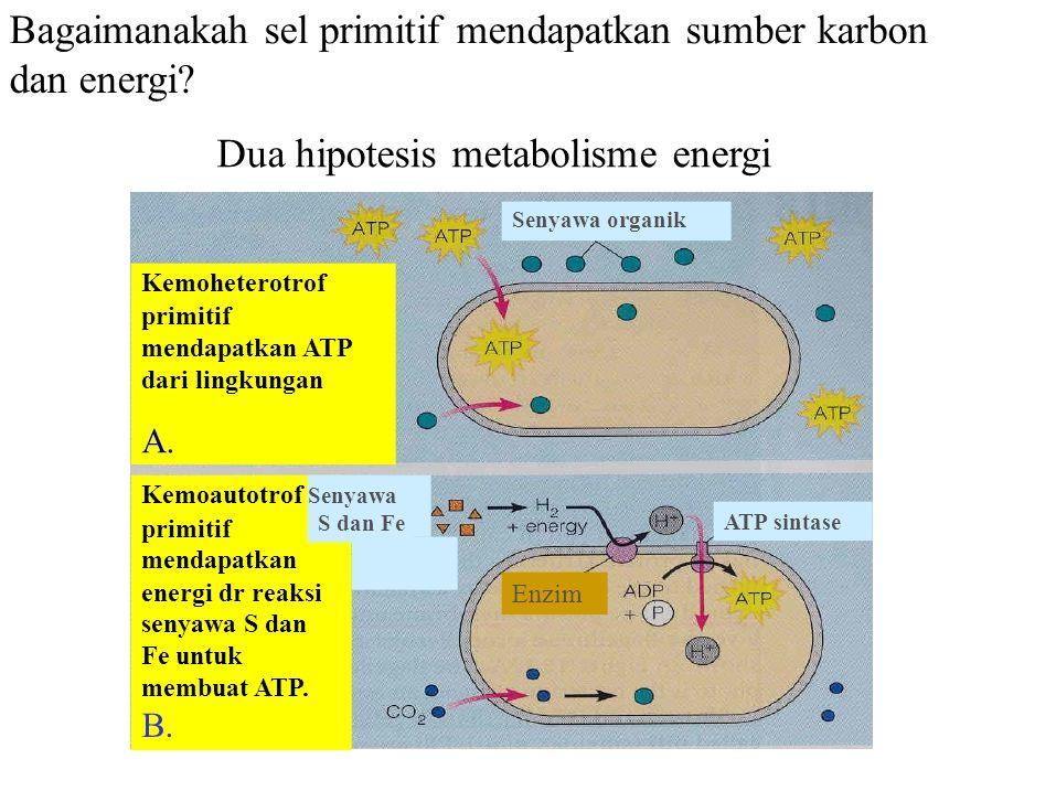 Bagaimanakah sel primitif mendapatkan sumber karbon dan energi? primitif mendapatkan energi dr reaksi senyawa S dan Fe untuk membuat ATP. B. ATP sinta