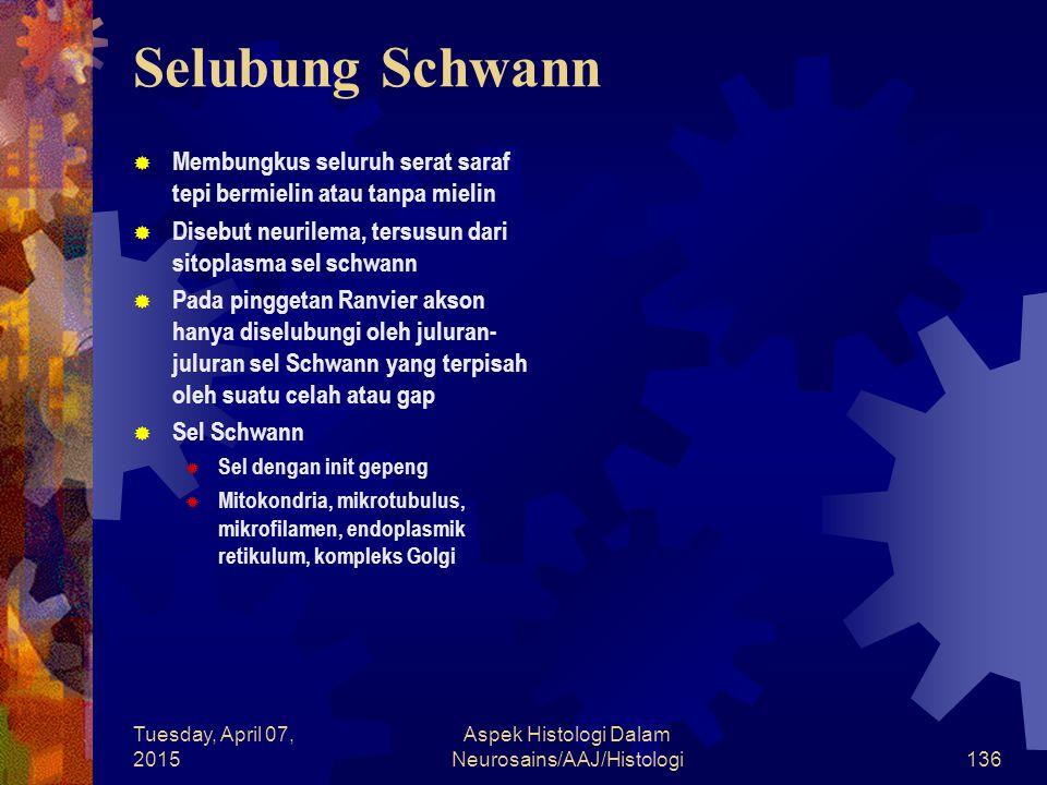 Tuesday, April 07, 2015 Aspek Histologi Dalam Neurosains/AAJ/Histologi136 Selubung Schwann  Membungkus seluruh serat saraf tepi bermielin atau tanpa