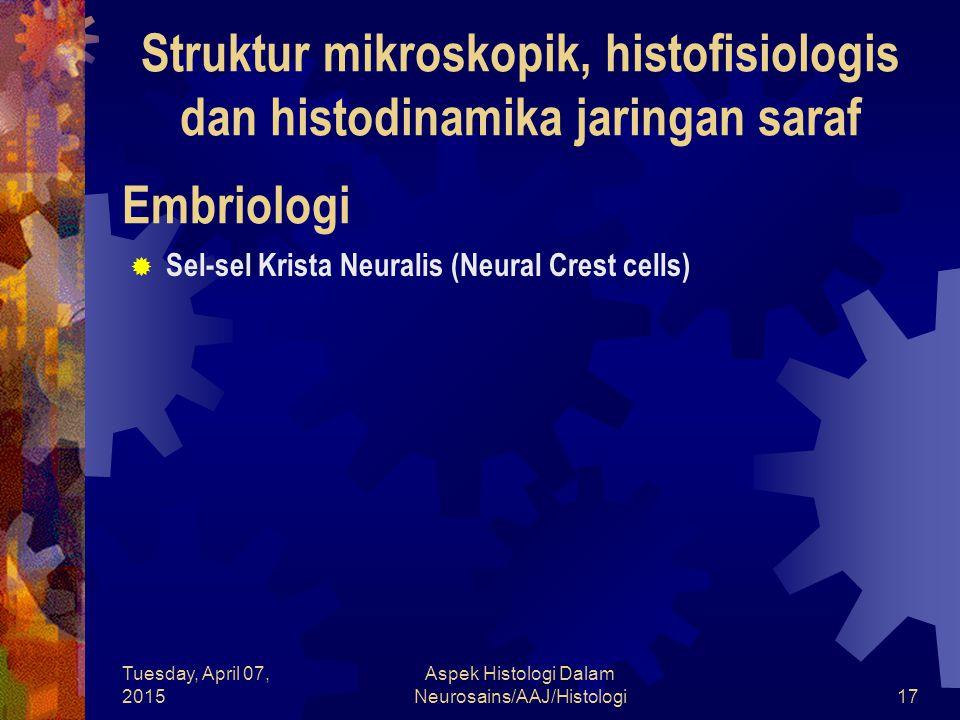 Tuesday, April 07, 2015 Aspek Histologi Dalam Neurosains/AAJ/Histologi17 Embriologi  Sel-sel Krista Neuralis (Neural Crest cells) Struktur mikroskopi