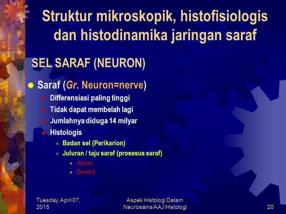 Tuesday, April 07, 2015 Aspek Histologi Dalam Neurosains/AAJ/Histologi20 SEL SARAF (NEURON)  Saraf ( Gr. Neuron=nerve)  Differensiasi paling tinggi