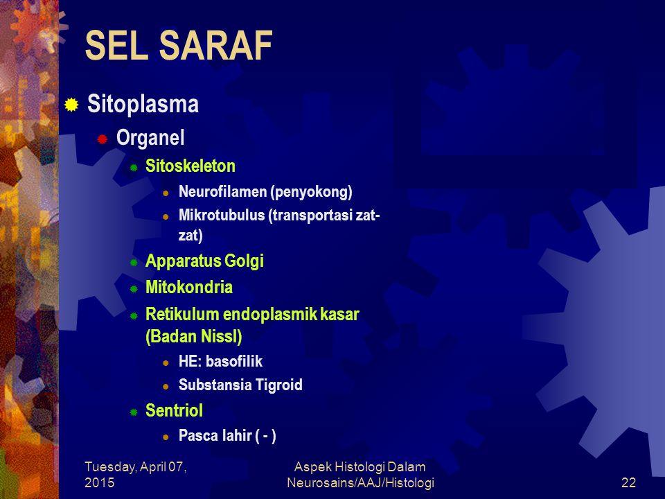 Tuesday, April 07, 2015 Aspek Histologi Dalam Neurosains/AAJ/Histologi22 SEL SARAF  Sitoplasma  Organel  Sitoskeleton Neurofilamen (penyokong) Mikr