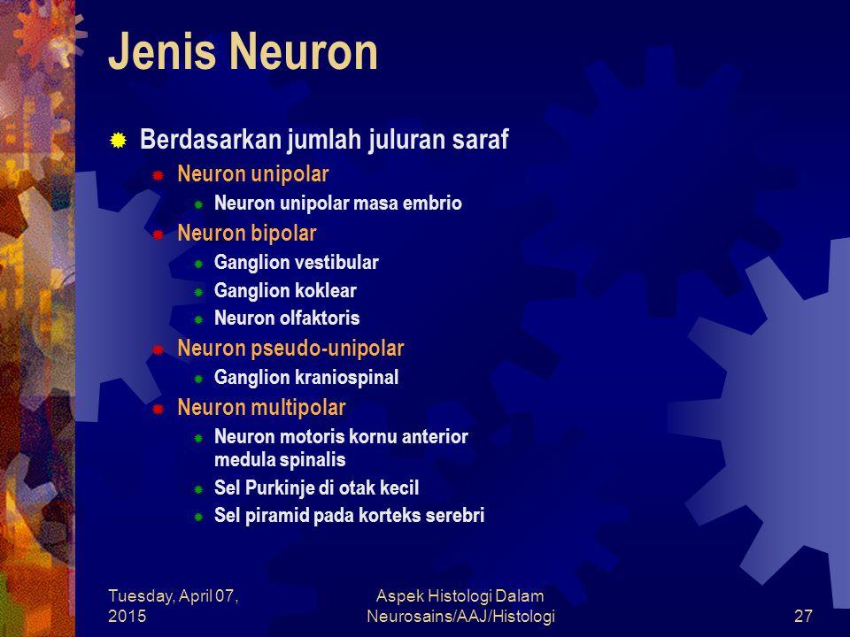 Tuesday, April 07, 2015 Aspek Histologi Dalam Neurosains/AAJ/Histologi27 Jenis Neuron  Berdasarkan jumlah juluran saraf  Neuron unipolar  Neuron un