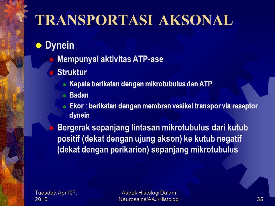 Tuesday, April 07, 2015 Aspek Histologi Dalam Neurosains/AAJ/Histologi35 TRANSPORTASI AKSONAL  Dynein  Mempunyai aktivitas ATP-ase  Struktur  Kepa