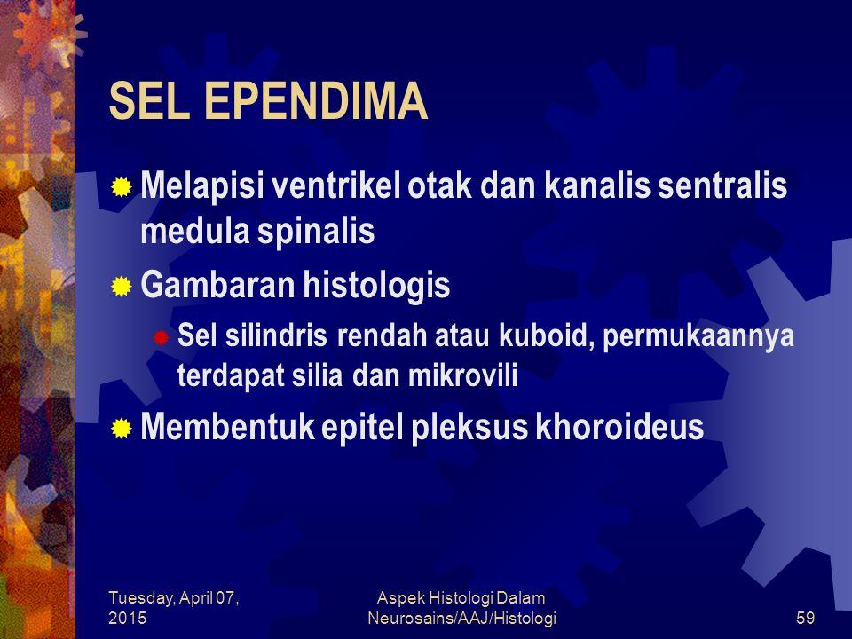 Tuesday, April 07, 2015 Aspek Histologi Dalam Neurosains/AAJ/Histologi59 SEL EPENDIMA  Melapisi ventrikel otak dan kanalis sentralis medula spinalis