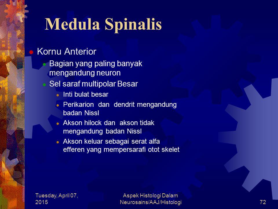Tuesday, April 07, 2015 Aspek Histologi Dalam Neurosains/AAJ/Histologi72 Medula Spinalis  Kornu Anterior  Bagian yang paling banyak mengandung neuro