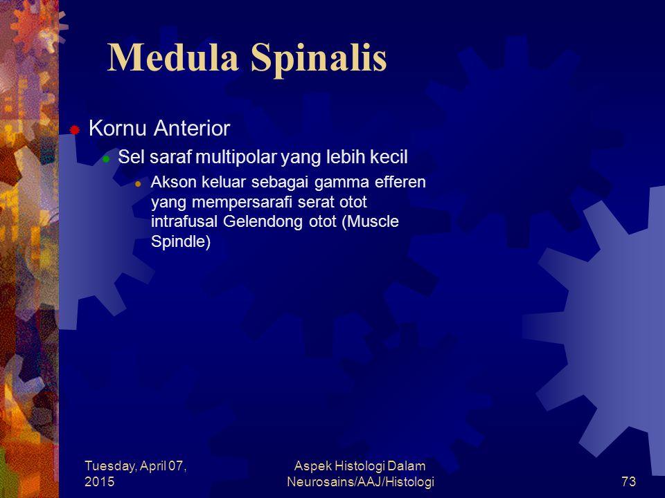 Tuesday, April 07, 2015 Aspek Histologi Dalam Neurosains/AAJ/Histologi73 Medula Spinalis  Kornu Anterior  Sel saraf multipolar yang lebih kecil Akso