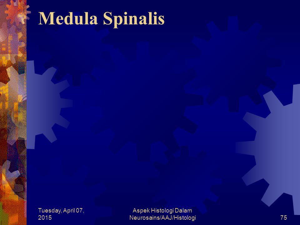 Tuesday, April 07, 2015 Aspek Histologi Dalam Neurosains/AAJ/Histologi75 Medula Spinalis